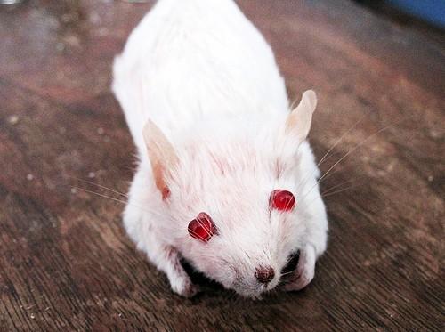 Как сделать чучело летучей мыши